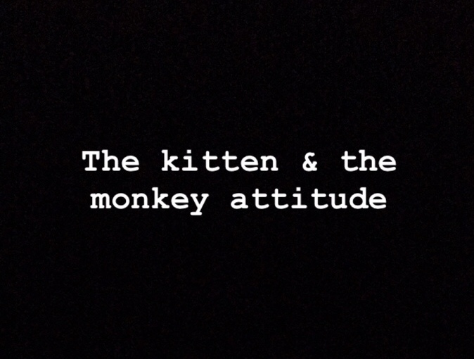 The «kitten» & the «monkey» attitude